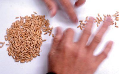 Anti GMO